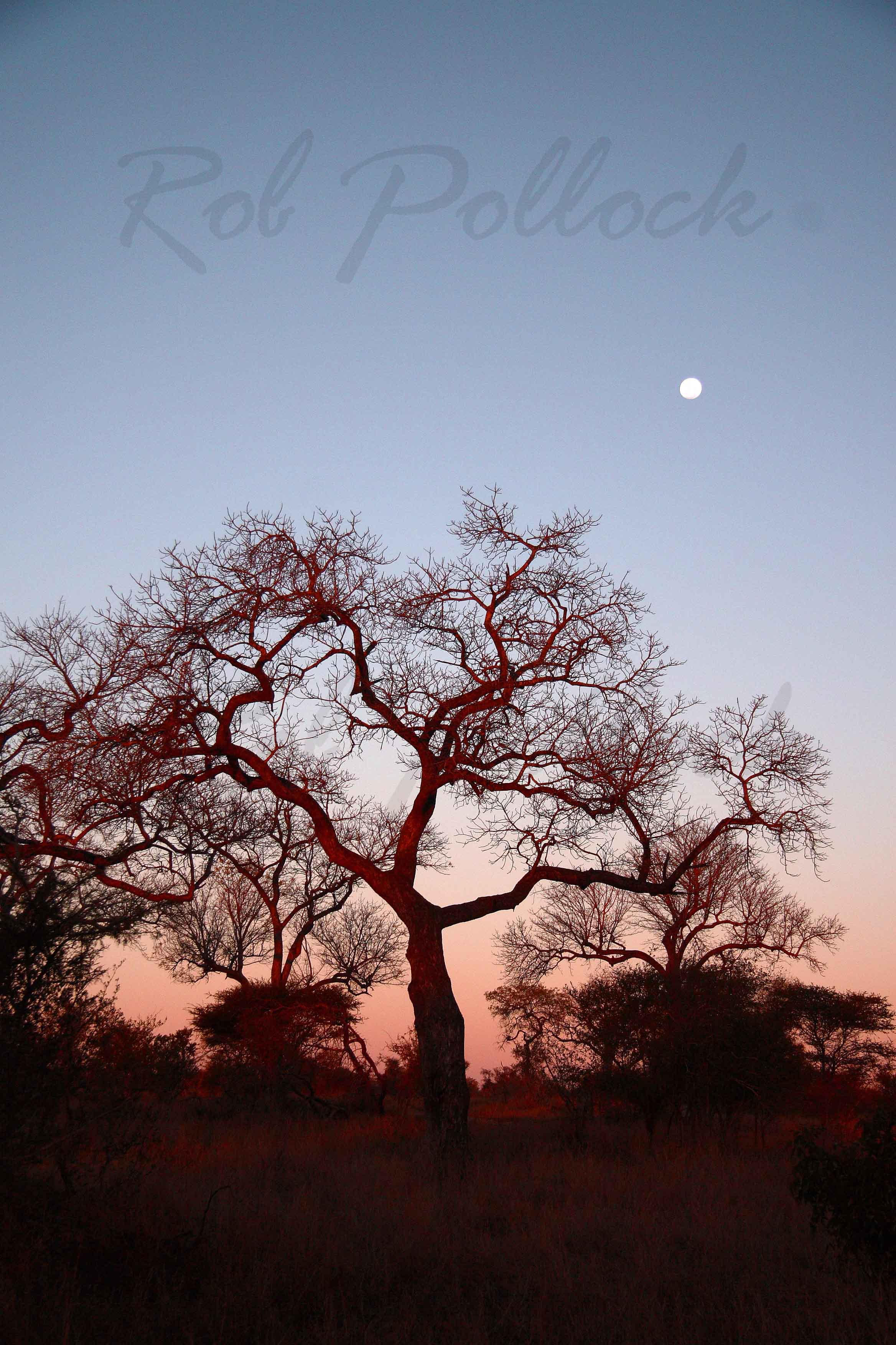Moonrise at Kruger National Park